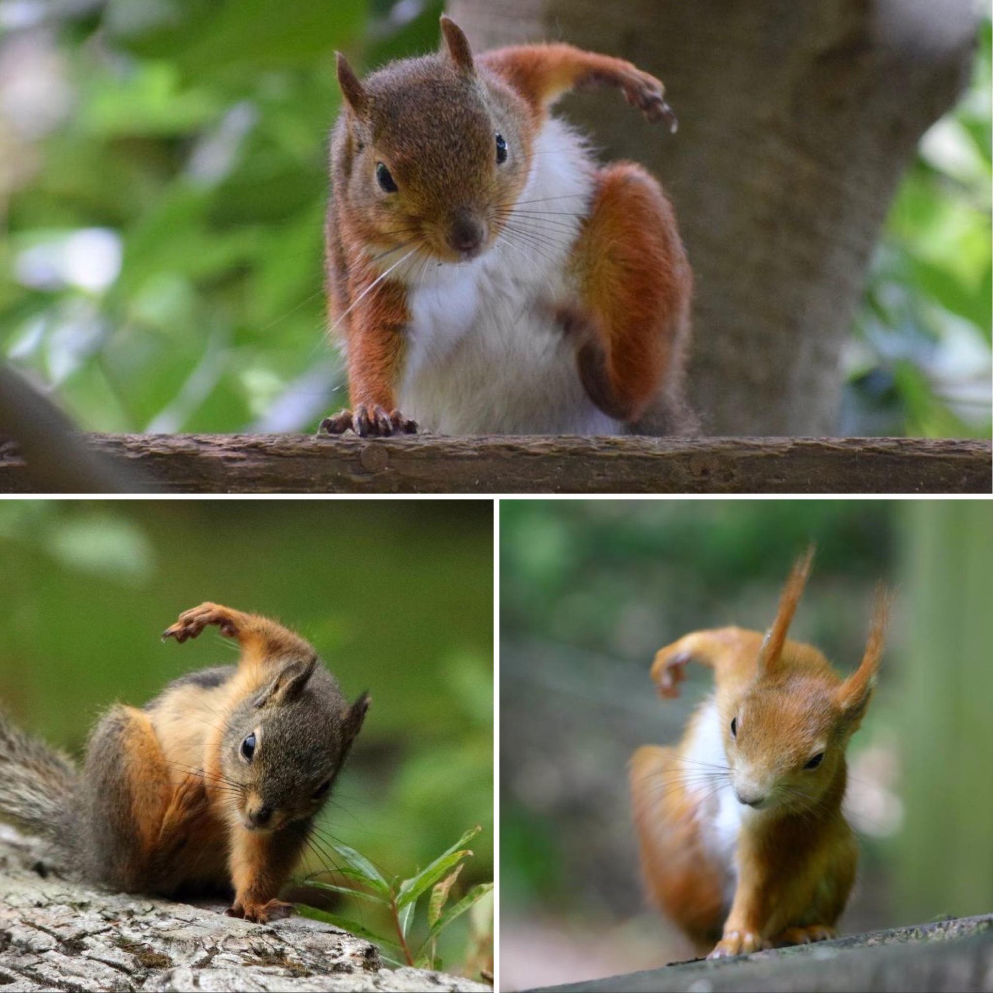 Images of Squirrels in Superhero Poses