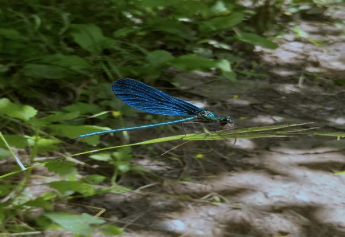 Синият вир, Медвен