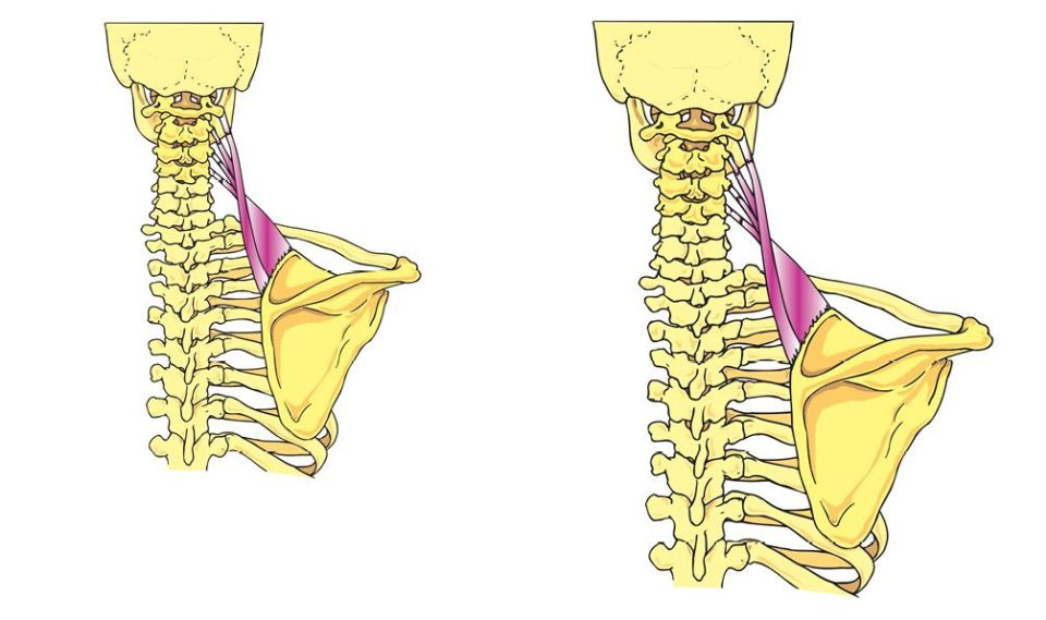 relationship between posture and occlusion