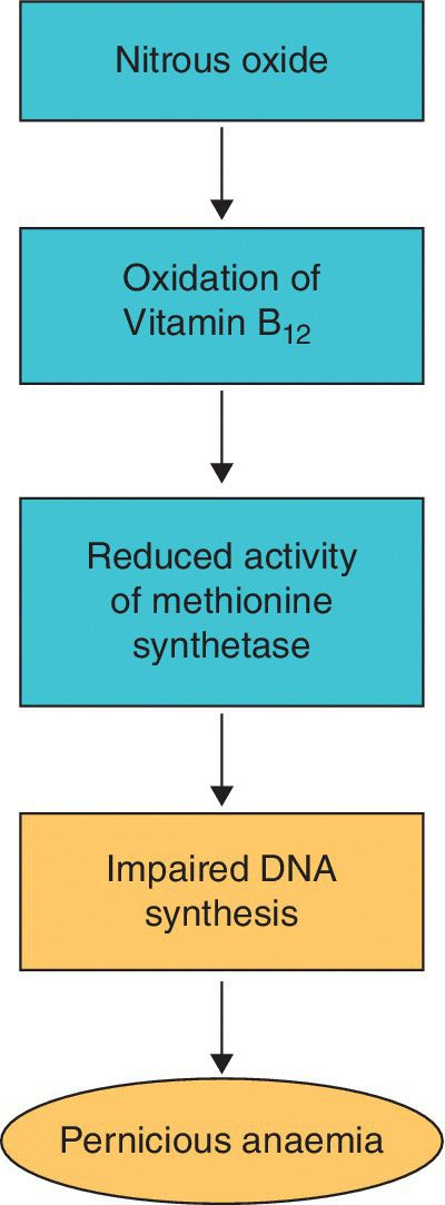 Flow of biochemical effect of chronic exposure to N2O, stating with nitrous oxide followed by oxidation of vitamin B12, reduced activity of methionine synthetase, impaired DNA synthesis, and pernicious anemia.