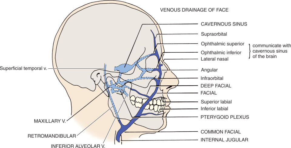 An illustration shows the venous drainage of the face.
