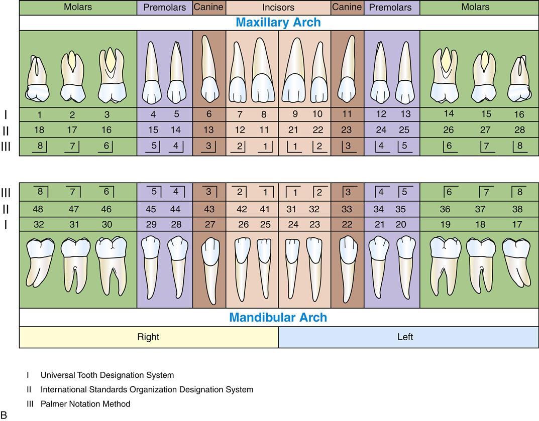 15 Overview Of The Dentitions