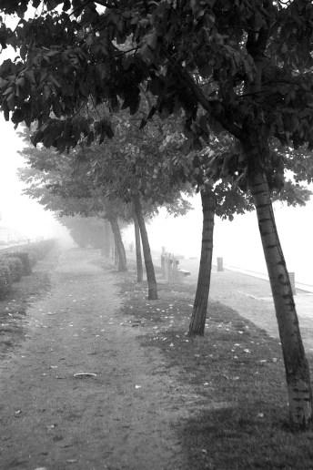 edda7-fog7