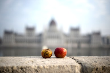 Parliament with apples