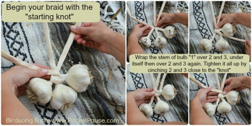 HOW TO BRAID GARLIC: THE STARTING KNOT
