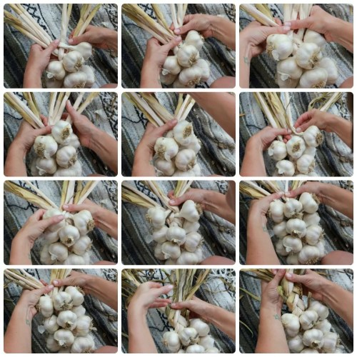How to braid garlic - illustrated