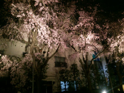 20150406 総持寺夜桜4