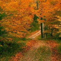 Pocono Outdoors Fall Foliage Report #2 October 14, 2021 - Fall Foliage Peak is Here!
