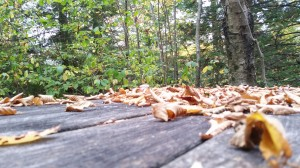 picnic area on lehigh gorge rail trail