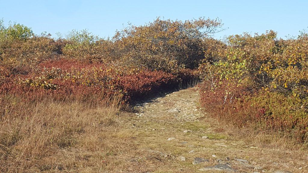 Poconos Fall Foliage Report