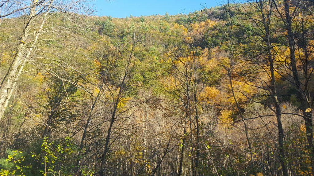 Fall Foliage Report 2019 - Jim Thorpe Bike Trail