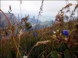 Flora w rejonie Kopy Kondrackiej - lipiec 2012