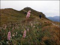 Rów grzbietowy w okolicach Suchego Wierchu Kondrackiego - lipiec 2012