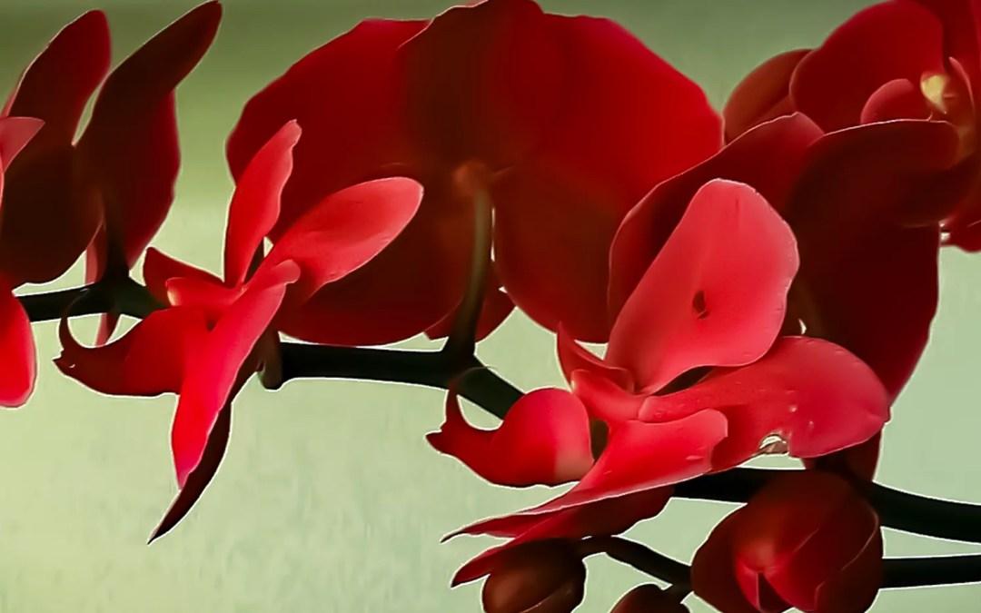 Contre l'excision, les Orchidées Rouges fleurissent à Bordeaux