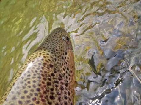 Trout and Smallmouth Bass Fly Fishing Report Podcast