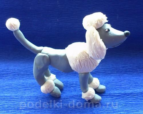 Plasticine12 থেকে কুকুর Poodle