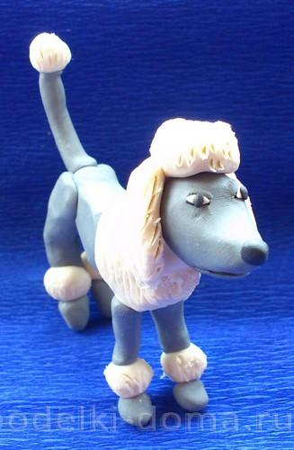 Plasticine13 থেকে কুকুর Poodle