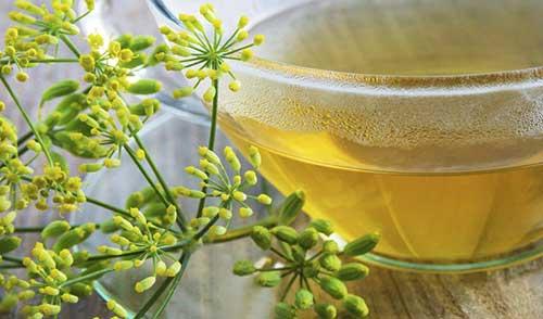 melhores sugestões de ervas e plantas medicinais