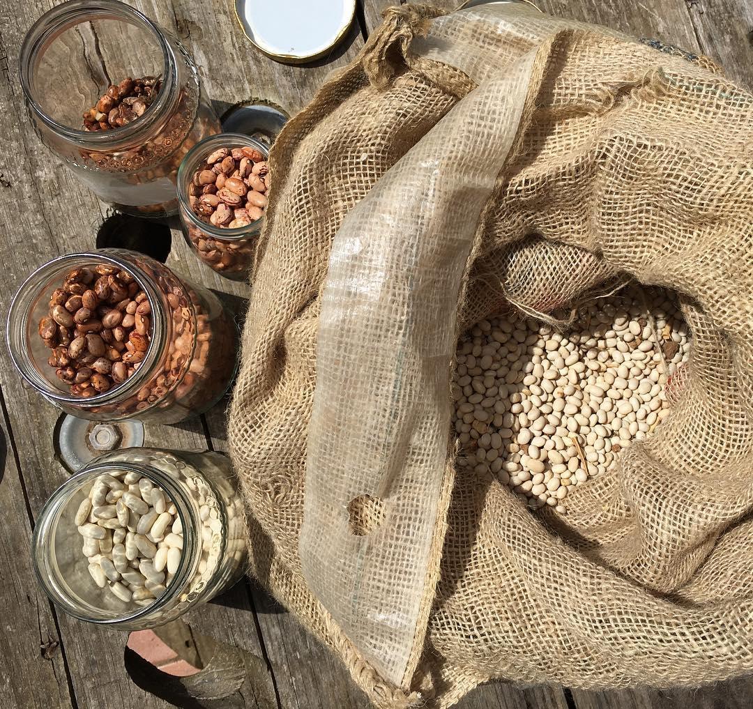 La preparazione della semina, radunare i fagioli bio dell'anno scorso per riseminarli #fagioli #bio #podereargo Non perdetevi la diretta su #Snapchat #love #beans #pulses #organic #iyp2016 #legumi #grower #semina #prodottitipici #maremma #agriturismo