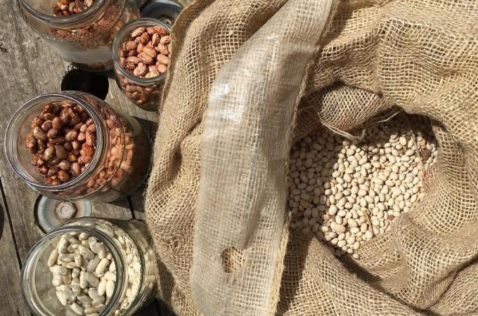 La semina dei fagioli