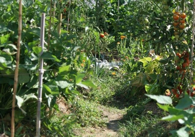 Perché fare un orto sinergico ?