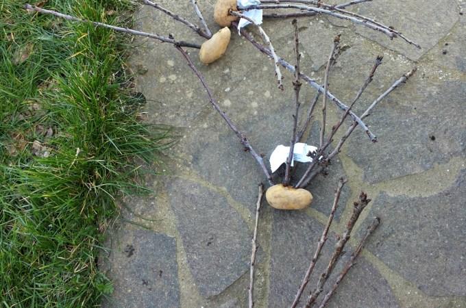 Innesto a spacco e innesto a corona su alberi da frutto