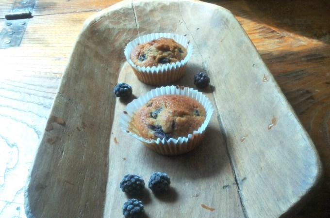 Muffins alle more selvatiche, miele e zenzero, questa volta senza glutine