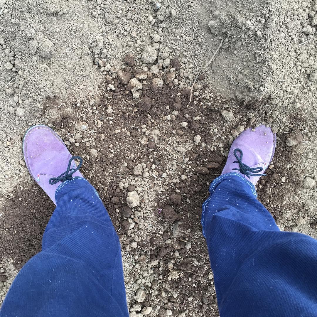 Put on you purple shoes and sow beans !! Per la semina dei miei fagioli, che faccio a mano e soprattutto con i piedi per ricoprire di terra i semi, amo mettere delle scarpe speciali. I miei stivaletti corti rossi con cui ho seminato insieme al mio vicino di Podere di 85 anni, un ettaro di terra a fagioli non me li dimentichero' mai. Ora sono passata al viola #grower #podereargo #agrituriismo #organicfarm #fagioli #biologici #maremma #country #sorano #toscana #beans