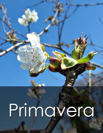 Primavera in Maremma