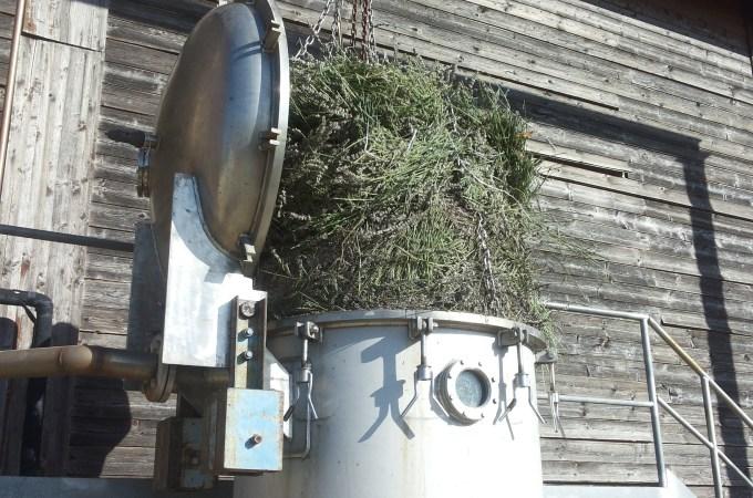 La distillazione della nostra Lavanda bio