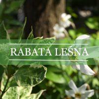 Rabata leśna