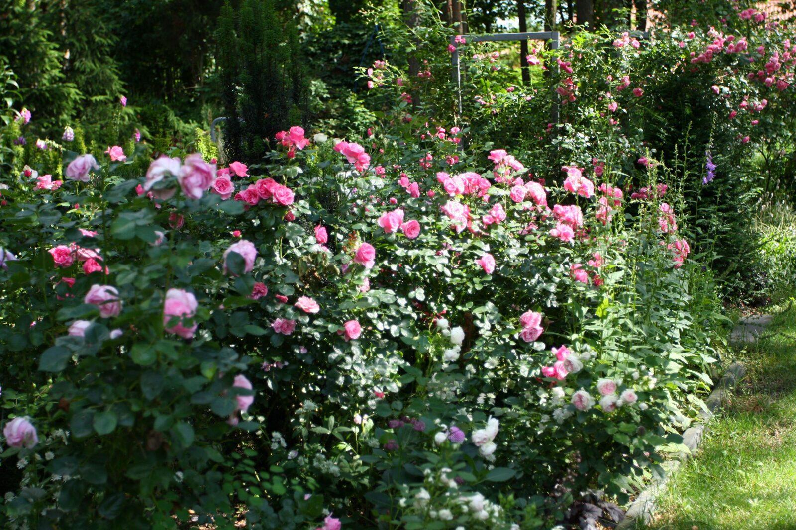 ogród Joli 29