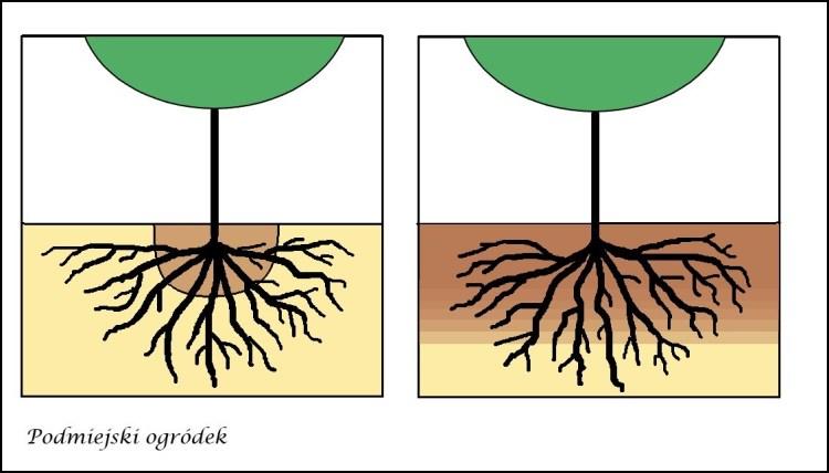 porównanie sposobów sadzenia - po kilku latach