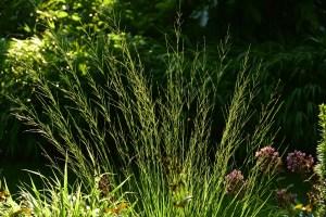 ogród cienisty Izy - lipiec;