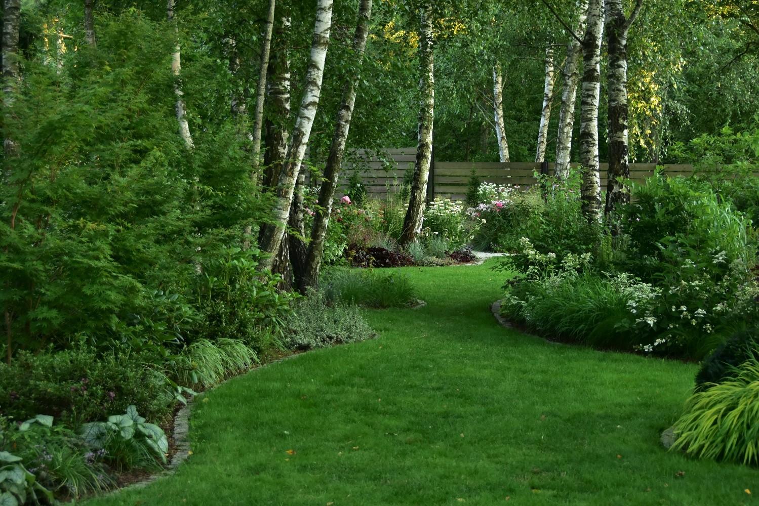ogród cienisty Izy - lipiec; ogród w cieniu; kule cisowe;