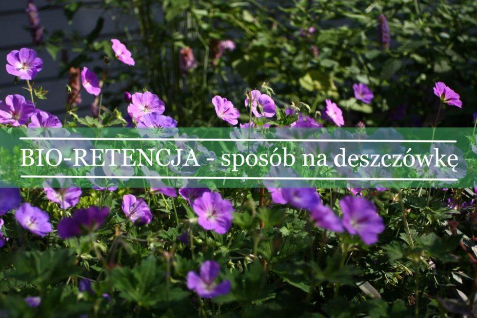 bioretencja - sposób na deszczówkę