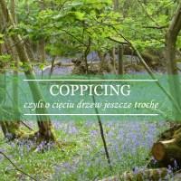 Coppicing, czyli cięcia drzew ciąg dalszy