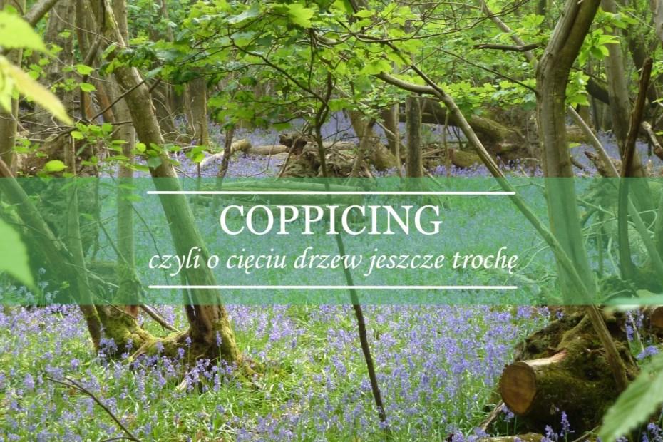 coppicing - cięcie drzew
