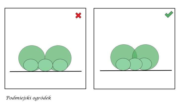 odległości między roślinami