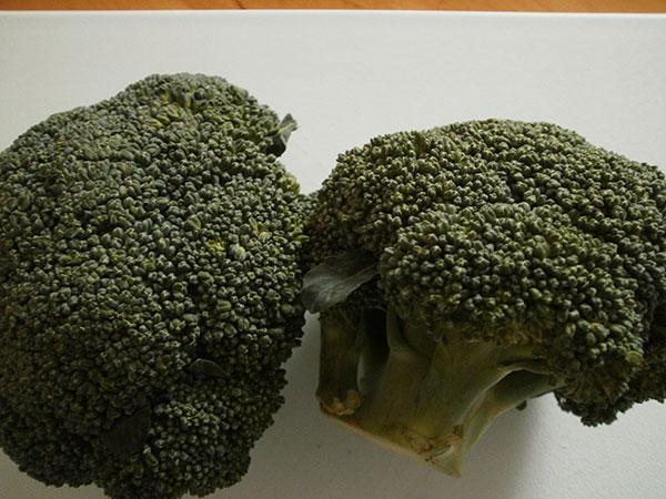 Как узнать что брокколи созрела. Когда собирать капусту брокколи на грядке