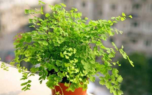 Декоративно-лиственные растения: фото видов с названиями ...