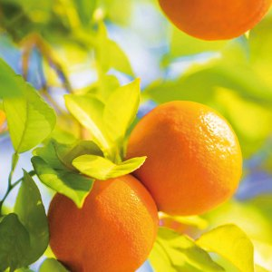 Essence d'Orange Douce Aethera