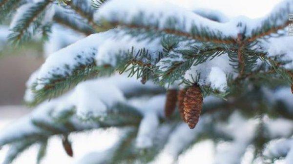 Погода на неделю: в Украине сильно похолодает и пойдет ...