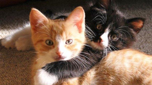 Чем полезны коты для детей: выводы ученых | podrobnosti.ua