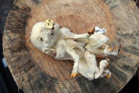 Авария в Чернобыле: шокирующие фото мутантов | podrobnosti.ua