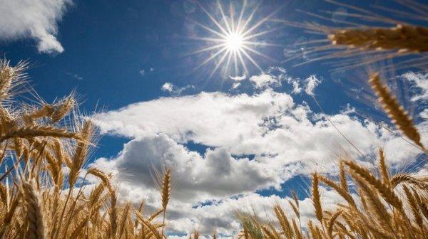 Какой будет погода в августе в Украине: синоптик дал ...