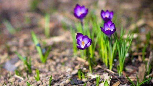 Погода на апрель: украинцев ждет настоящая весна ...