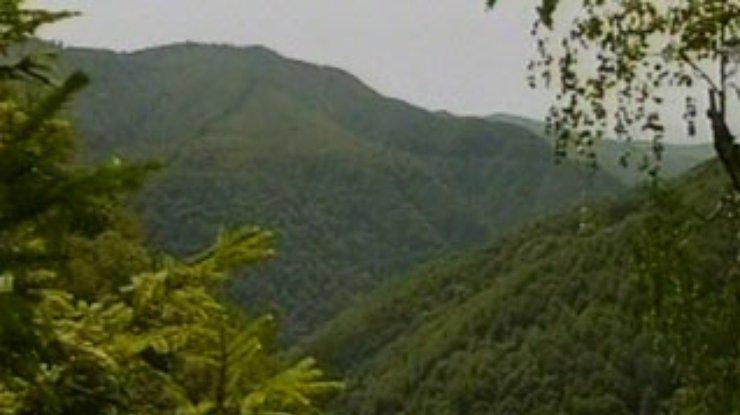 Буковые леса Карпат уже оценили в ЮНЕСКО. А в Украине - еще нет