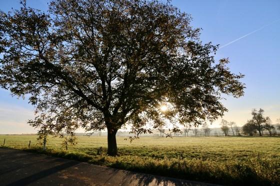 tree-1795206_1920