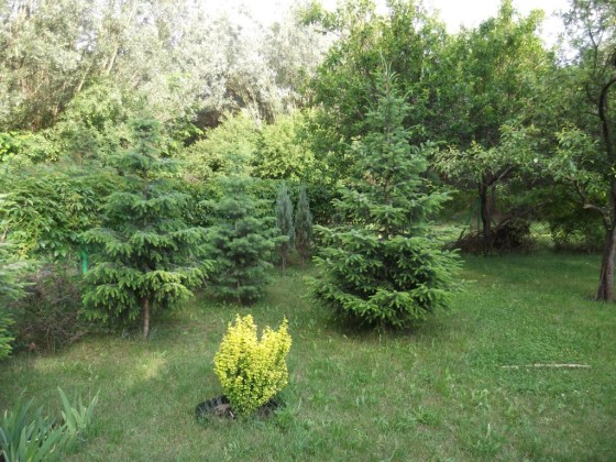 Drzewa na mojej działce